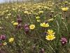 Grassroots Ecology