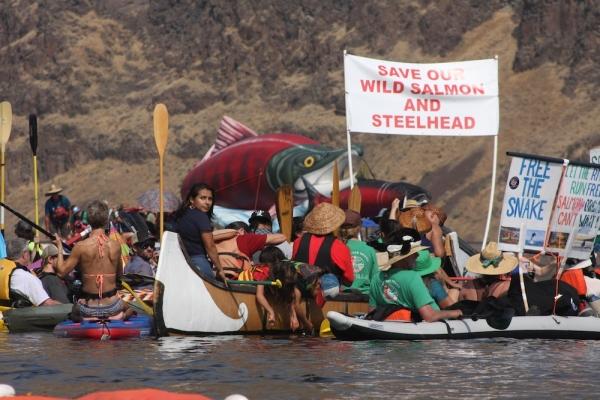 Save Our wild Salmon Coalition