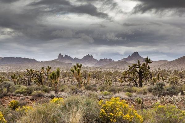 Mojave Desert Land Trust