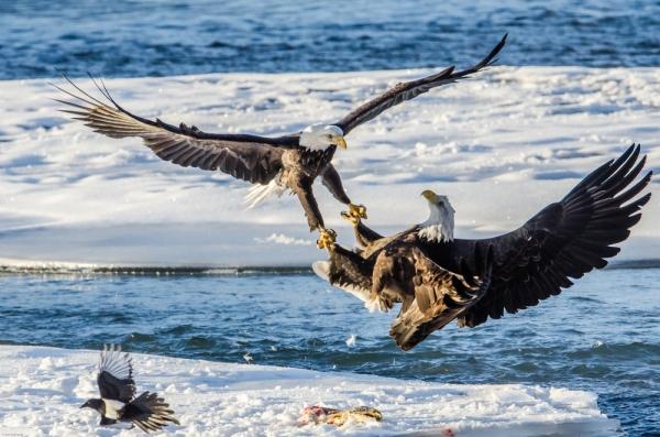 Alaska Clean Water Advocacy/Earth Island Institute