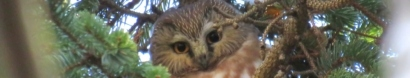 Shinrin-Yoku: Forest Breathing Walk — Connecticut Audubon Society