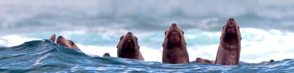 Channel Islands Marine & Wildlife Institute