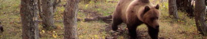 Backcountry Bear Safety — People and Carnivores