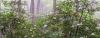 Kentucky Natural Lands Trust