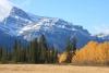 Yellowstone to Yukon Conservation Initiative