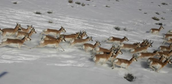 Wildlife Conservation Society Community Partnerships Program