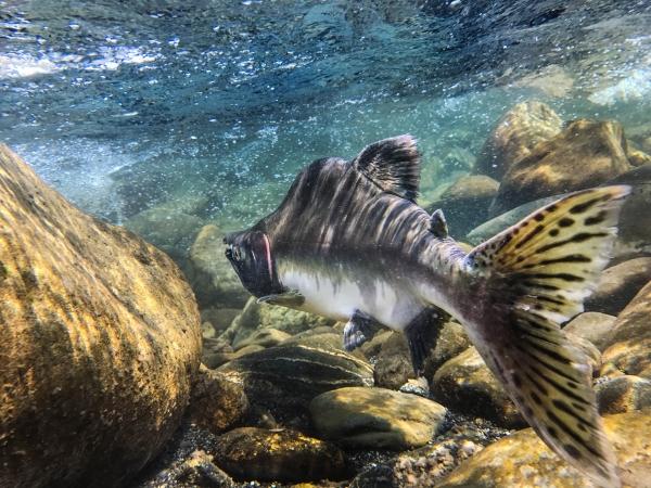Nooksack Salmon Enhancement Association