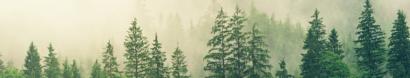 Saskatchewan Environmental Society