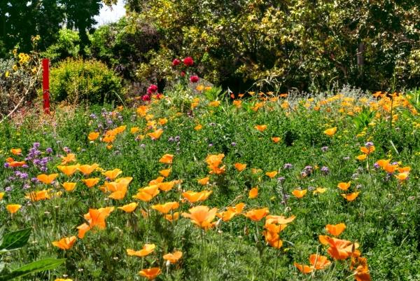 Los Angeles Arboretum Foundation Inc