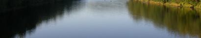 The endangered Atlantic Sturgeon desperately need your help! — Delaware Riverkeeper Network