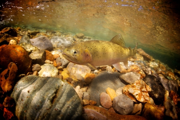 Montana Trout Unlimited