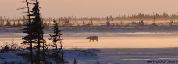 Great Bear Foundation