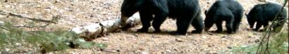Help Monitor Wildlife Cameras on Mt Hood — Cascadia Wild