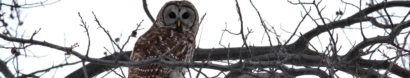 Owl Prowl Series: Last Friday of each month Nov-April — The Center for Wildlife