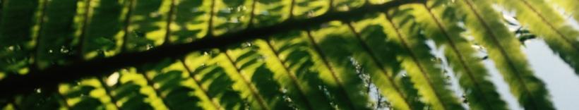 Hālau Kū Māna