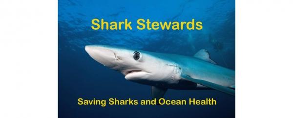 Shark Stewards – Earth Island Institute