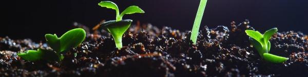 Pesticide Action Network North America