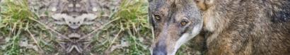 Workshop didattico sul Lupo nel Parco Naturale della Lessinia — Io non ho paura del lupo