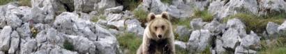 Salviamo Terminillo: fermiamo un progetto inutile e dannoso, #NOTSM! — Salviamo l'Orso