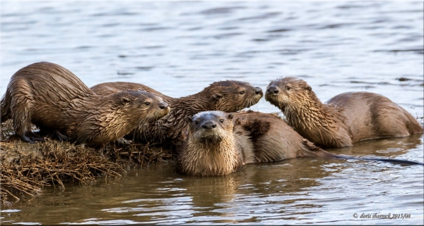 The River Otter Ecology Project