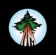 Ancient Forest Alliance Logo
