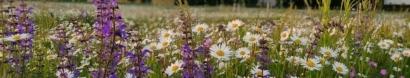 Mähen mit der Sense – der Weg zur blühenden Wiese — Netzwerk Blühende Landschaft – Eine Initiative von Mellifera e.V.