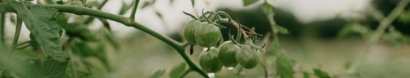 LIVESTREAM – Climate Change & Farmland: Building a Resilient Future for Washington — PCC Farmland Trust
