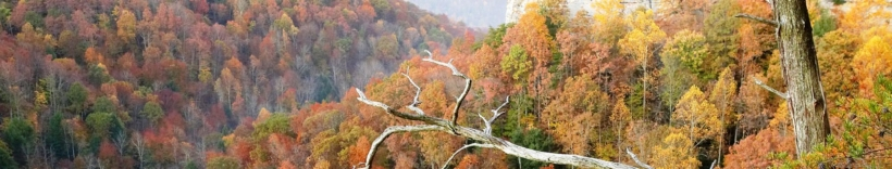 The Nature Conservancy in Tennessee