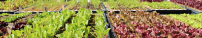 Twin Villages Foodbank Farm