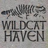 Wildcat Haven Logo
