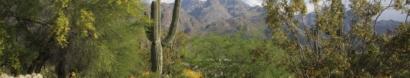 Friends of Sabino Canyon