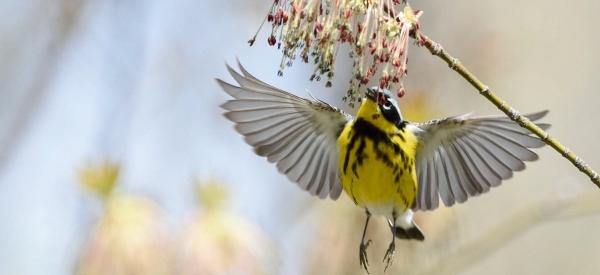 Audubon Society of Western Pennsylvania