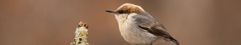 Georgia Audubon
