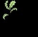 Indiana Forest Alliance Logo
