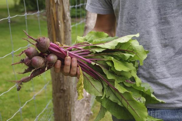 National Organic Coalition