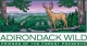 Adirondack Wild: Friends of the Forest Preserve Logo