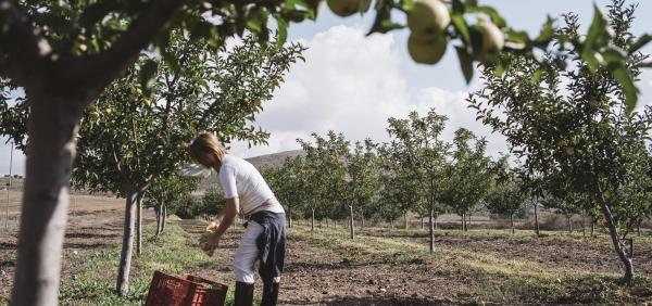 Regenerative Organic Agriculture