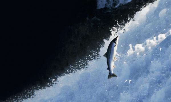 The Icelandic Wildlife Fund