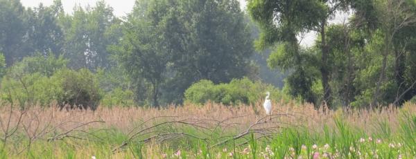 Black Swamp Conservancy
