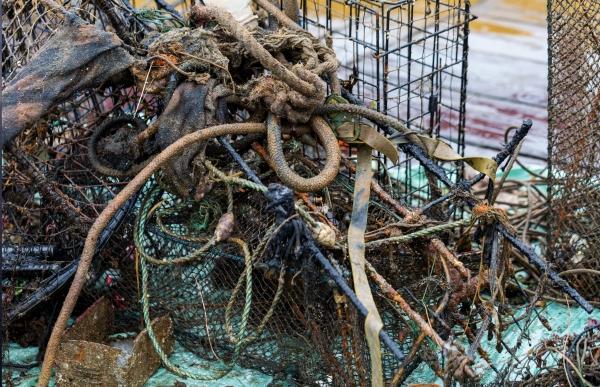 Emerald Sea Protection Society
