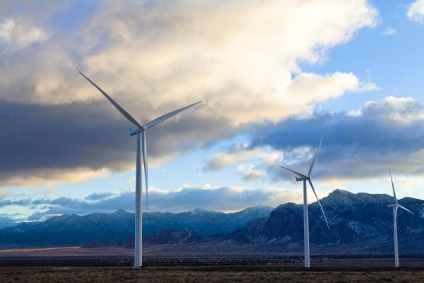 American Wind Wildlife Institute
