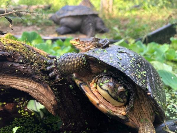 Ontario Turtle Conservation Centre
