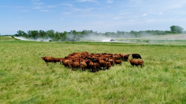 Practical Farmers of Iowa