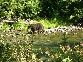 Grizzlyonshore
