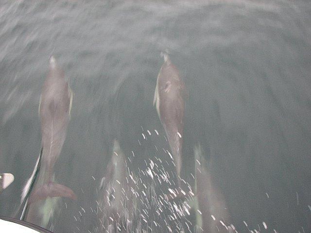 Dolphin_arm2
