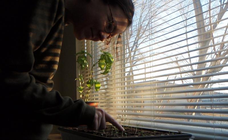 Liz - seedlings