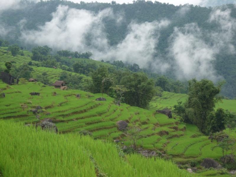 Fields of barley on trek in 2