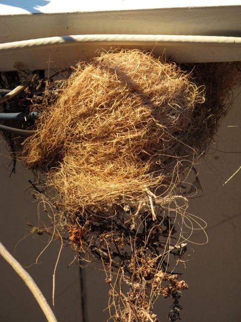 3 nest