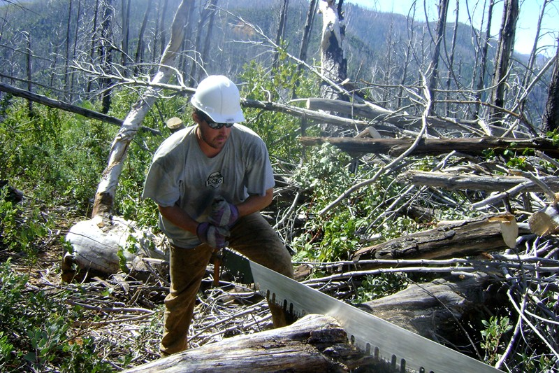 Trail Clearing in the Kalmiopsis
