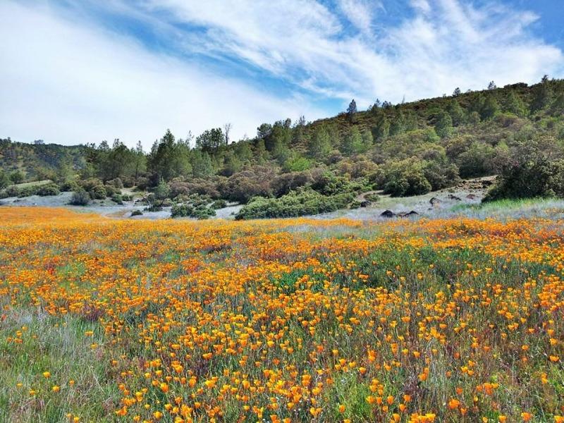 Berryessa-wildflowers-Andrew-Fulks